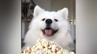 ASMR Dog Eating Homemade Popcorn I MAYASMR