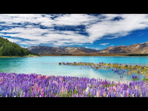 11 HOURS Morning Relaxing Music, Stress Relief, Sleep Music, Healing Therapy