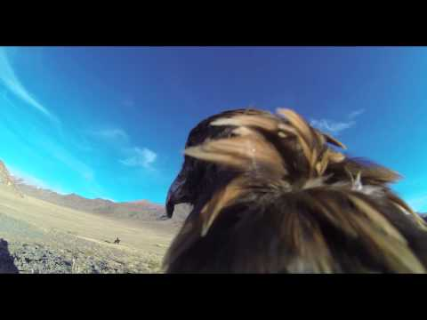 Speed diving Eagle with GoPro in Mongolia #2