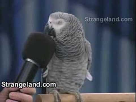 Unbelievable amazing Parrot Video