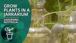 Grow aquatic plants in a jarrarium