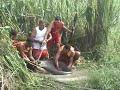Cobra sucuri a anaconda da Amazônia