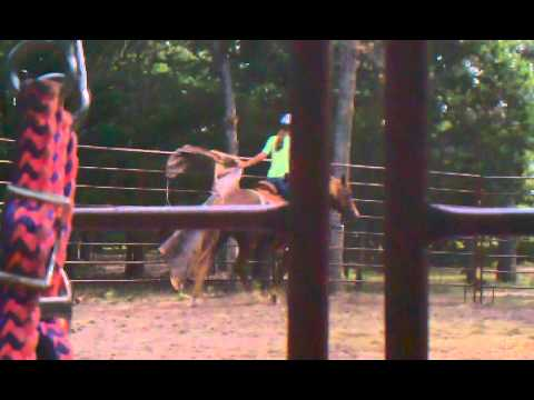 New Horse And Tarp video