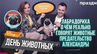 О чём говорят животные/ Предательство Саши/ Лабрадориха/ Chubaka Vlog!