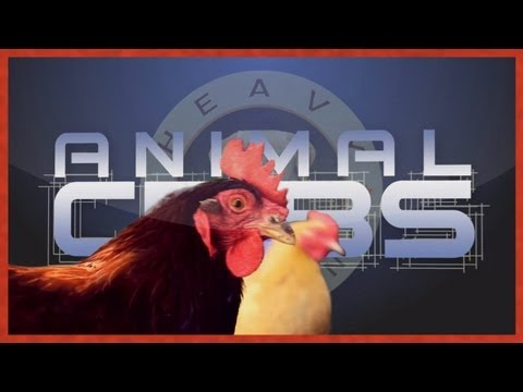 Chicken Coup Resort and Spa  | Animal Cribs | Heavy Petting Originals