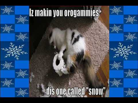 Jingle Cats and Dogs - white christmas.wmv
