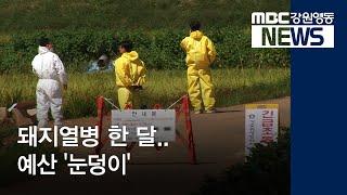 R)돼지열병 장기화..예산 '눈덩이'