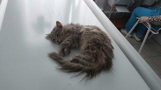 Милый котик, жизнь - это боль....