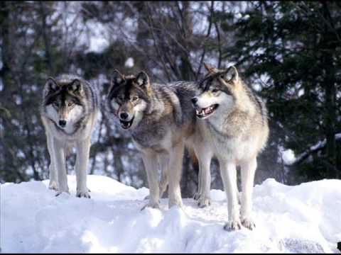 Nightbreed - Pack of Wolves (Original mix, not Pendulum)
