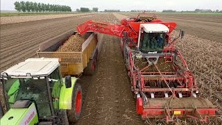 Potato Harvest , Cultivation and Ploughing | 2x Claas Xerion - Dewulf Kwatro | akkerbouwbedrijf NIVU