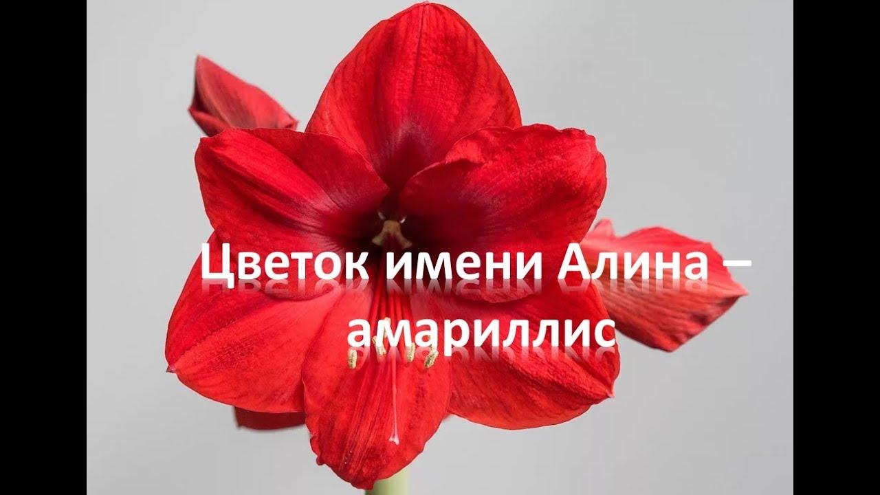 Цветок с именем алина