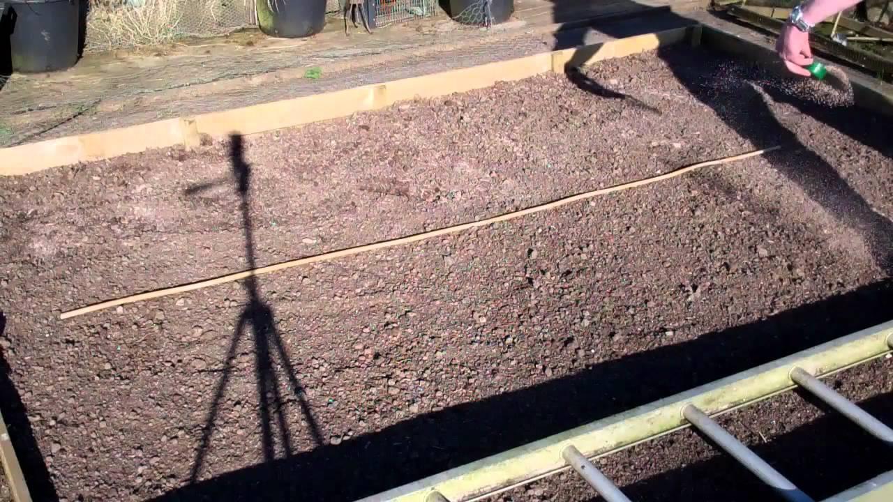 Allotment Diary March 26th Final Soil Preparation