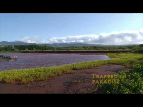 TIP EP0110-Kauai Beauty