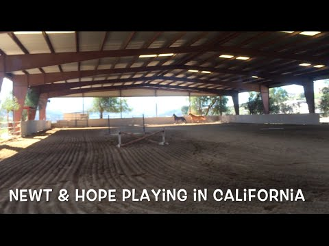 My horses playing while turned out in California