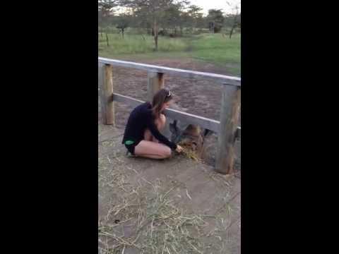 Meeting a rhino in Kenya