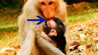 Breaking Heart!, Why Duchese Weaning Her New Baby & Weak Baby Like That, Baby Need More Milk Now