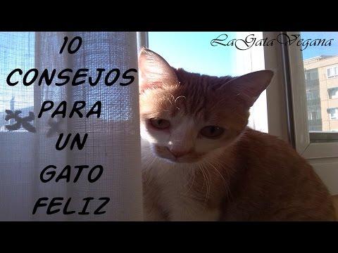 10 CONSEJOS PARA QUE TU GATO SEA FELIZ / TIPS PARA MEJORAR LA CALIDAD DE VIDA DE UN GATO