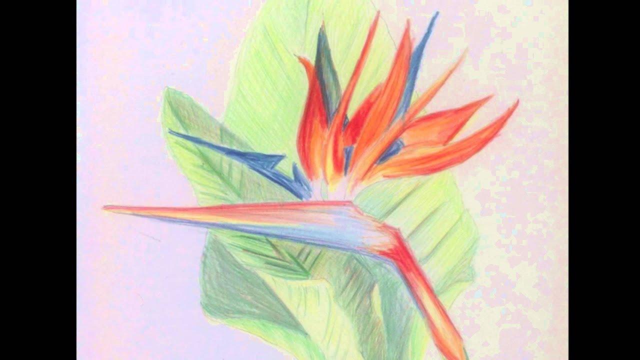 Apprendre dessiner mes dessins dessins de fleurs - Photo de fleur a dessiner ...