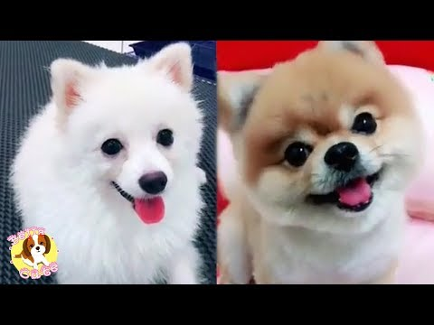Cute and lovely Puppies - The most funny Dogs - You will laugh non-stop