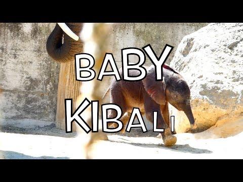 Kibali & Numbi, Baby & Mama. Afrikanischer Elefant (Loxodonta africana) Lumix dc-fz82 Superzoom