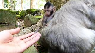 Baby Timo just see Ashley runs so fast & follow her | Very lovely Ashley & baby monkey Timo
