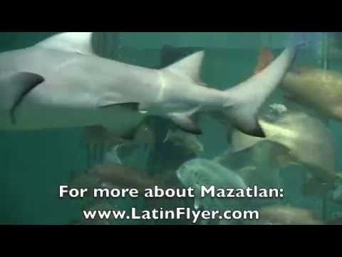 MAZATLAN: Swimming with Sharks at Mazatlan Aquarium