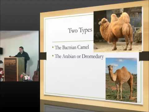 Animals of the Bible 3 - Camel