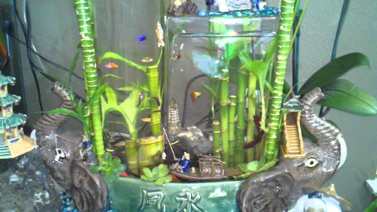 Lucky Bamboo Aquarium Bamboo Gravity Aquarium