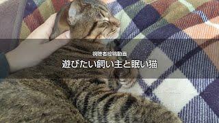 遊びたい飼い主と眠い猫 猫動画