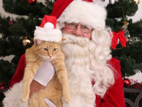 Santa Paws Photos at the Marin Humane Society!
