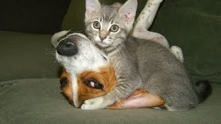 Funny Animals - Funny Animal Videos - Cute Animals - Funny Dogs