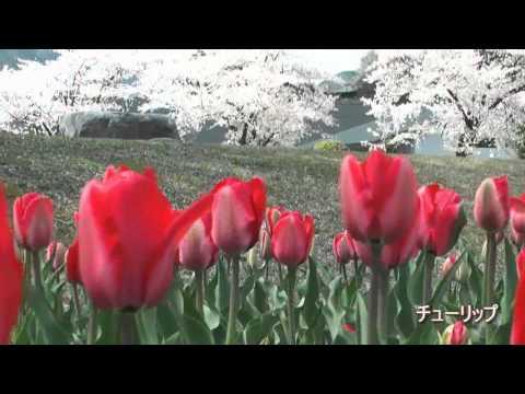 下呂市 「飛騨川公園」 ~春~