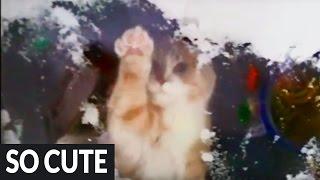 猫が一生懸命雪かき!?部屋に入れてくれアピールに悶絶♪
