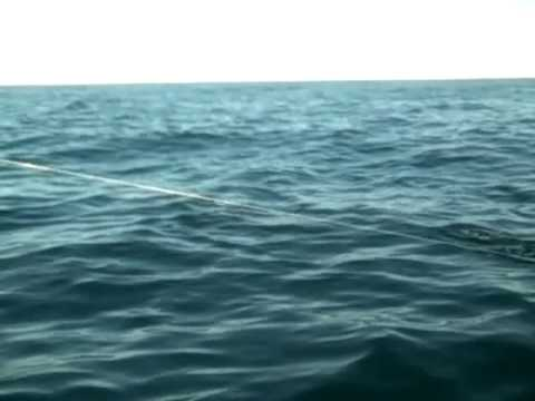Dorado Fishing Sea of Cortez Los Barriles,BCS Mexico 12 29 10