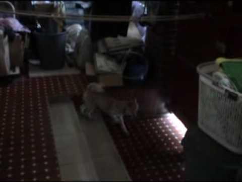 布吉不死心,跑到陽台繼續騷擾梅子。