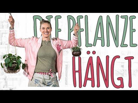 DIE PFLANZE HÄNGT - HÄNGETOPF DIY