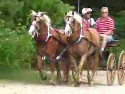 Carriage driving pairs of horses