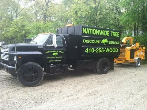 Tree Removal Baltimore, MD | Tree Service Baltimore, MD | Nationwide Tree Discount Service
