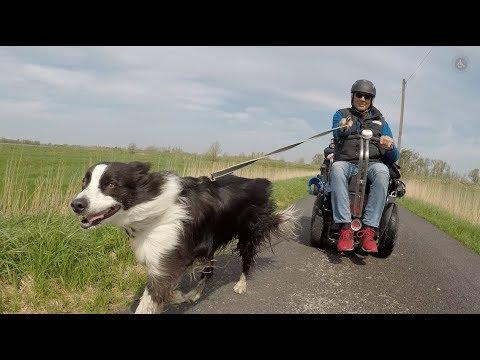 Rollstuhl Hund Zuggerät