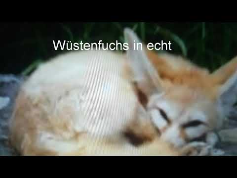 Echte Tiere wildcraft Tiere. Die 5 Tierarten. Wildcraft Lea super player Deutsch