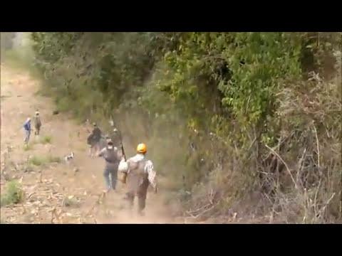 Cacería de Venado en Guatemala... ¿Un deporte?