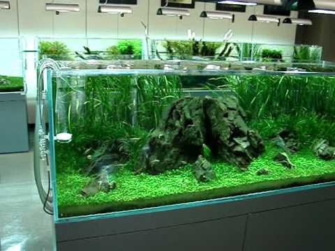 Ada gallery niigata ada youtube for Ada fish tank