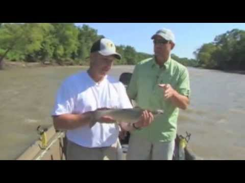 Catfishing TIps - Channel Cats using catfish dip bait - (From the G3 Sportsman Archives)