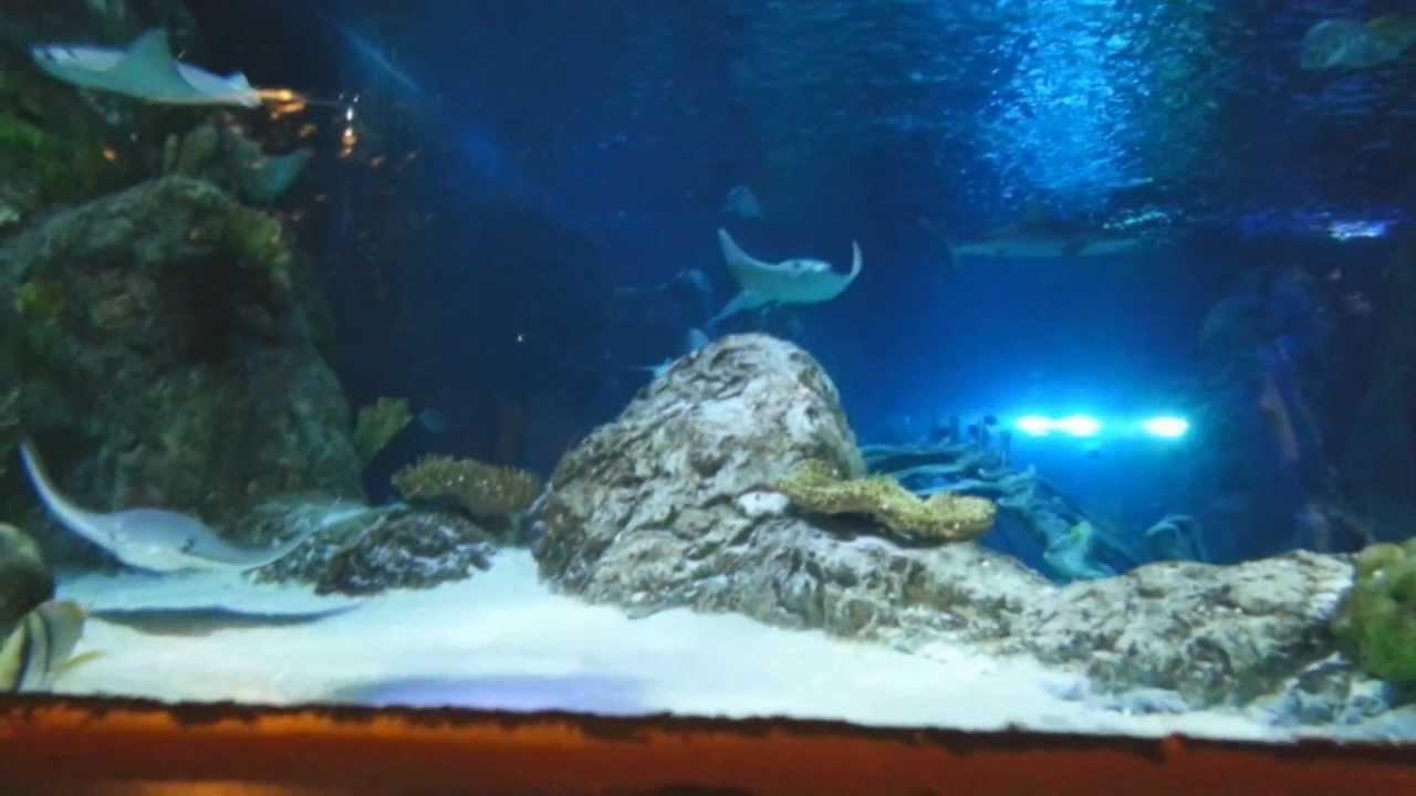 Sea Life Grapevine Mills Aquarium Paseo Familiar Phc Youtube