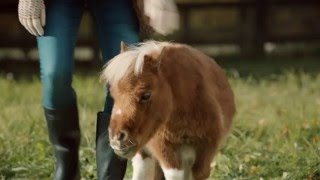Amazon TV Ad -- A Lonely Little Horse