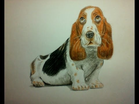 How to draw a dog with watercolor pencils? (Draw and Paint)