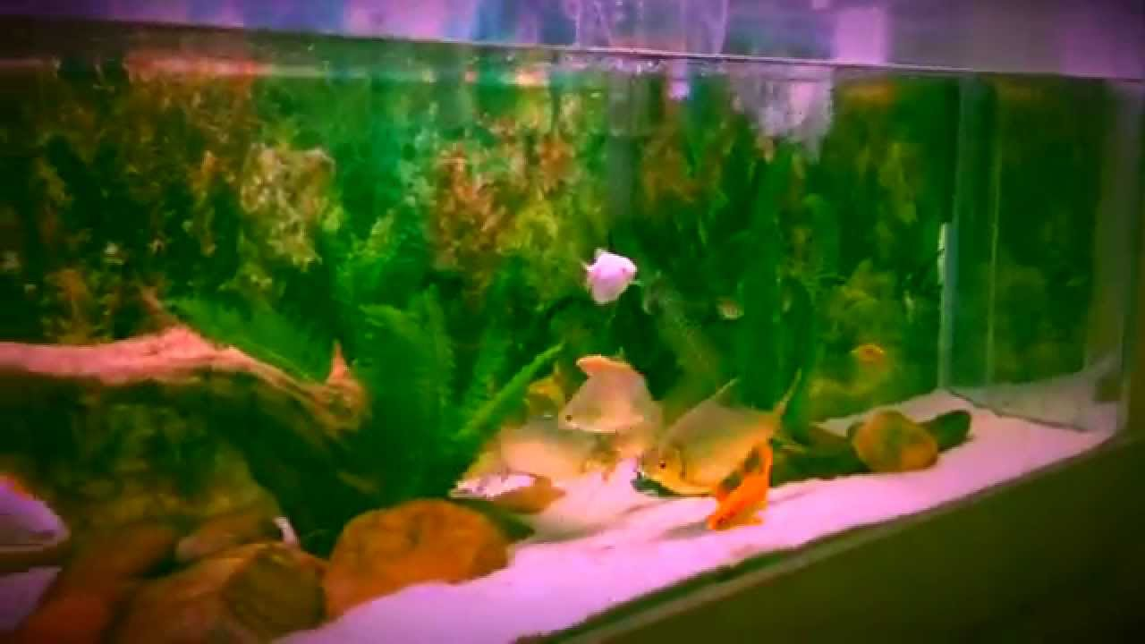 Fast, fun and easy fish tank cleaning and water change - YouTube