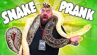 Best Giant Snake Prank on Dad!! 🐍 Spider and Snake Encounters at CVXLive 2017!