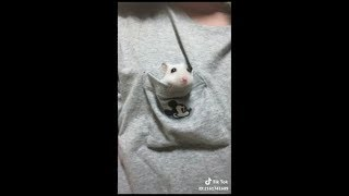 Funny Adorable & Cute Animal-Compilation 2018 (6)