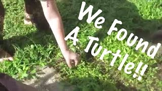 We Found A Turtle! | Vlog 8/23/15